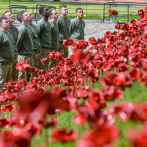 English Heritage Announce 140,000 people visited Poppies: Weeping Window